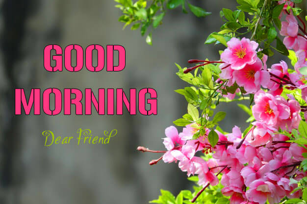 Free Beautiful Flower Good Morning Wishes Images