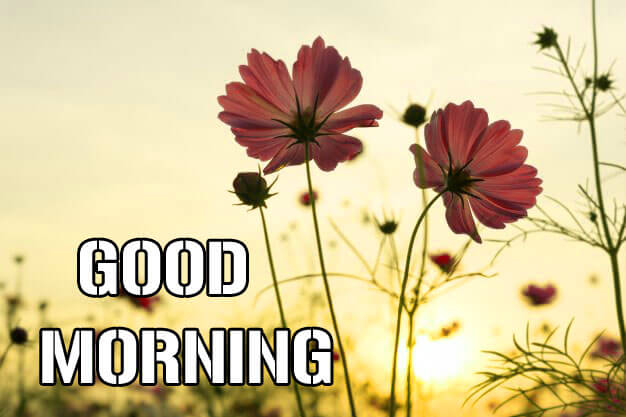 Free Full HD Good Morning Wishes Images
