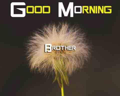 Free Good Morning Images 4