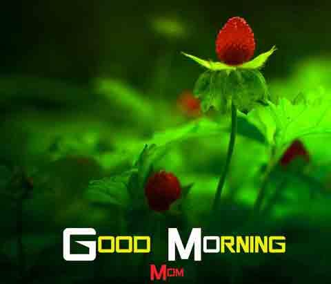 Good Morning New Photo HD