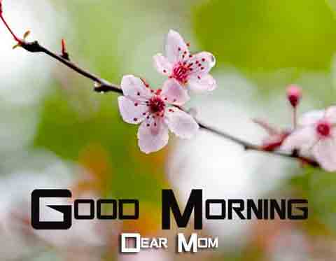 Free Good Morning Images 6