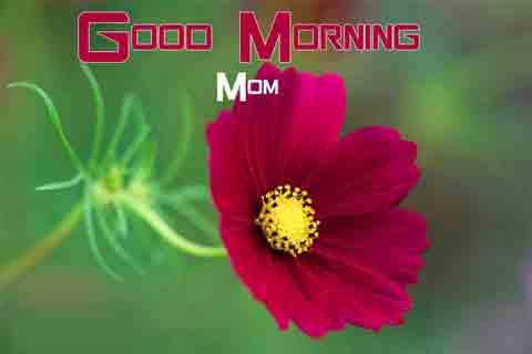 Free Good Morning Images 7