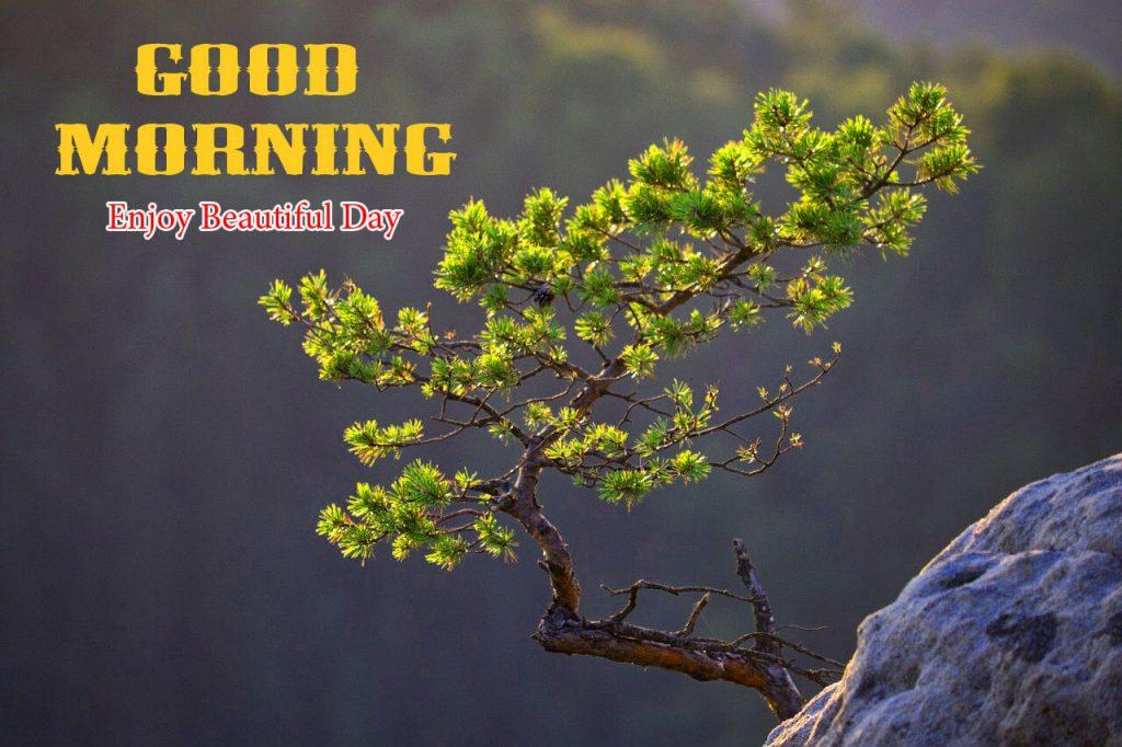 Fresh Good Morning Images HD