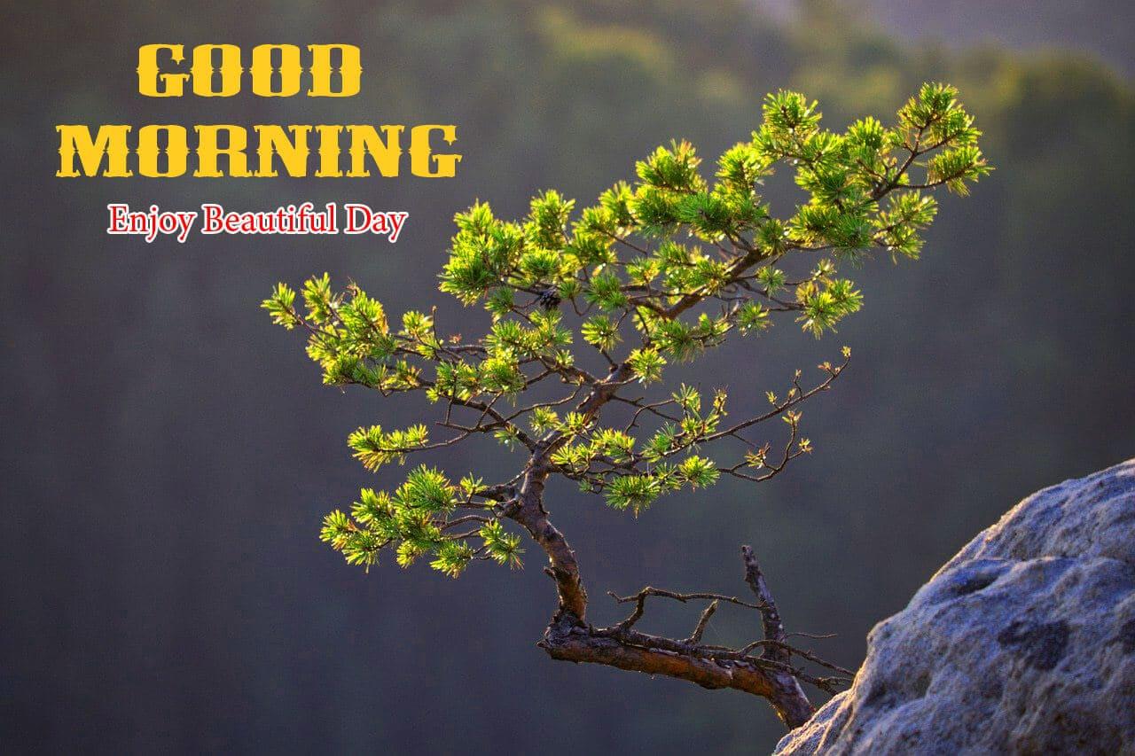 658+ Good Morning Images Wallpaper HD Download