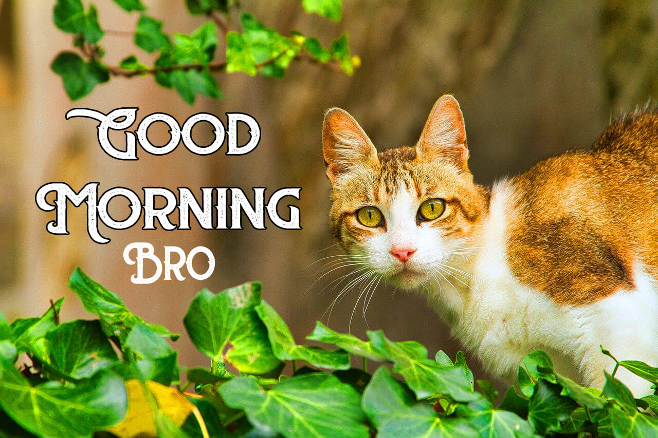 HD Good Morning Images Royalty Free Images