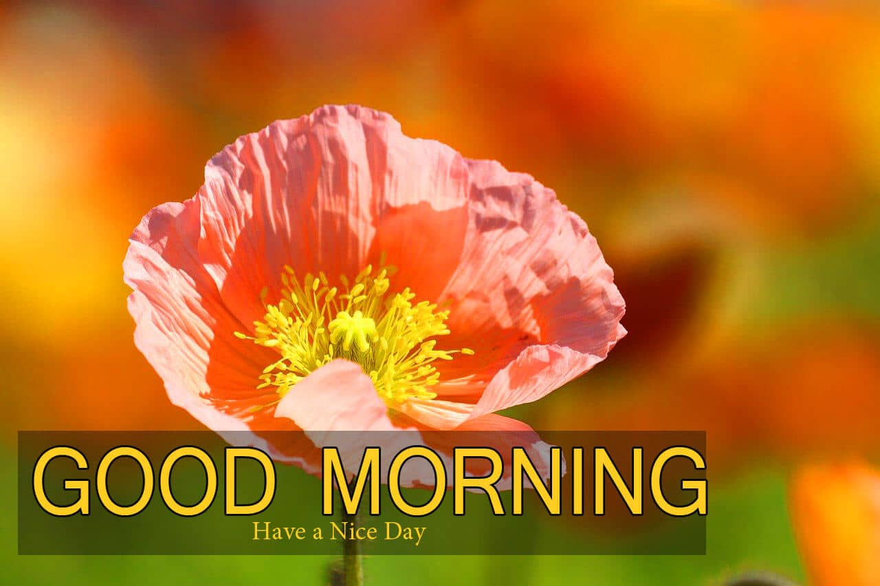 94+ Good Morning and Good Luck Wishes Images Photo Download