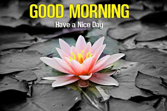 Good Morning dear sister images