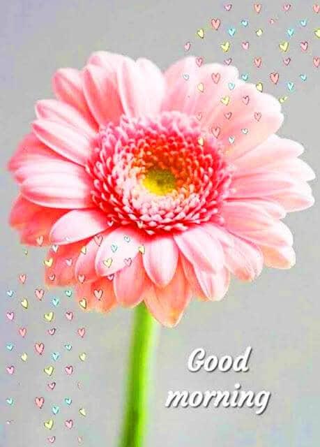 952+ Good Morning Images Wallpaper Download Desi Love Couple