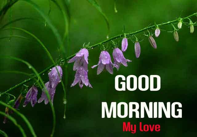 Good Morning pink flower images hd