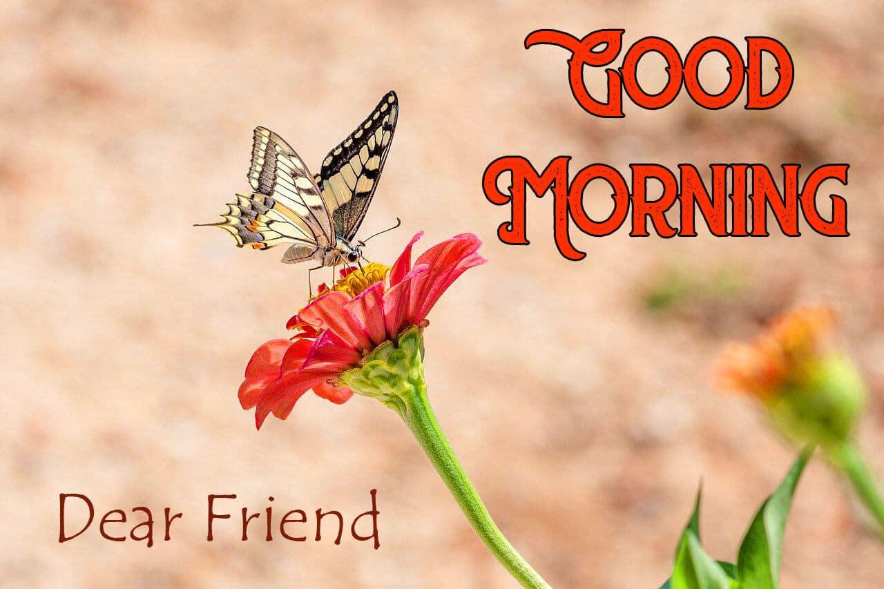 499+ गुड मॉर्निंग फोटो वॉलपेपर डाउनलोड इन हिंदी - Good Morning Wallpaper In Hindi