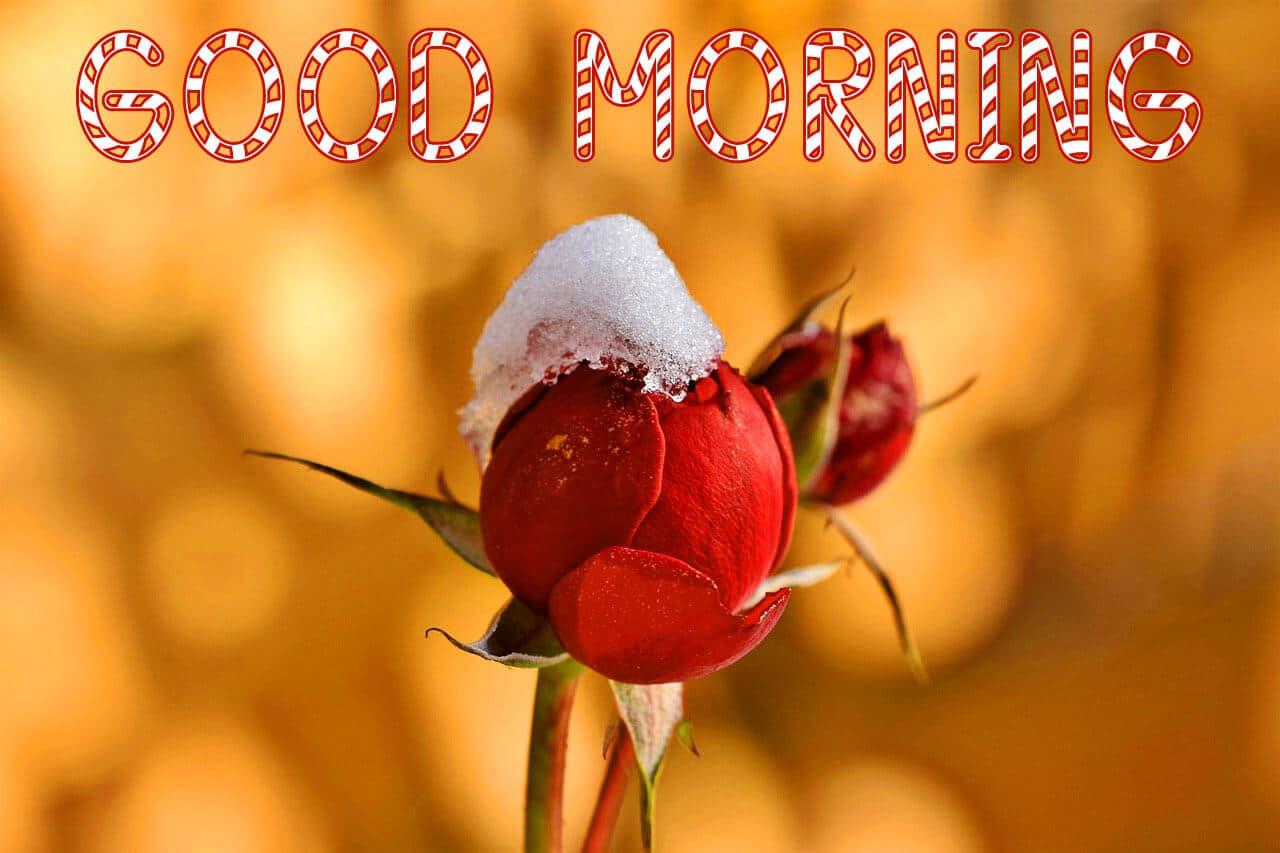 4k Ultra HD Good Morning Images Pics Wallpaper Download
