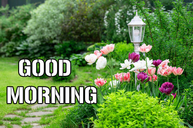 Nature Lover Good Morning Wishes Images