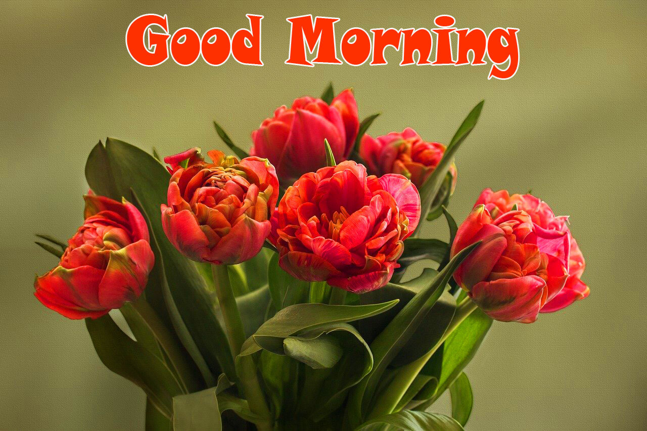 131+ Special Good Morning Wishes Images Photo Download