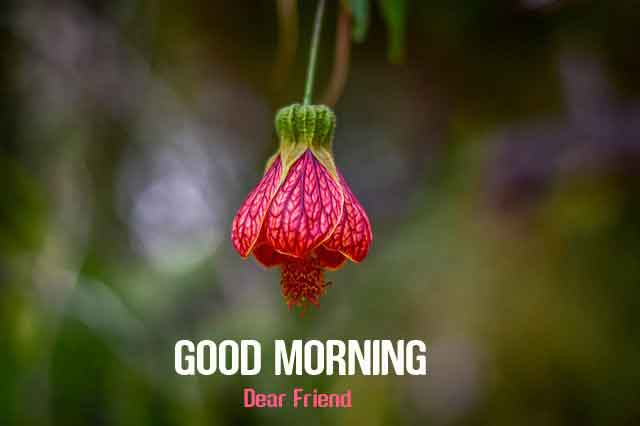 alone flower Good Morning hd download