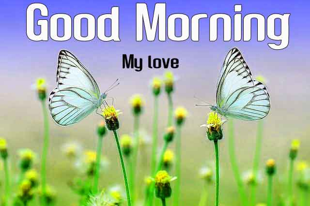 beautiful butterfly Good Morning hd download