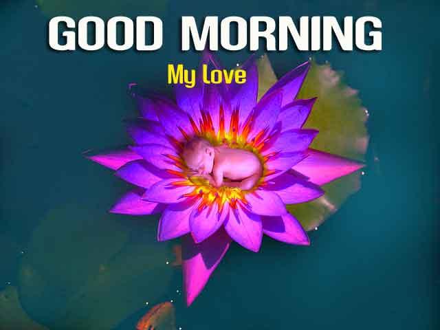 beautiful flower Good Morning hd download