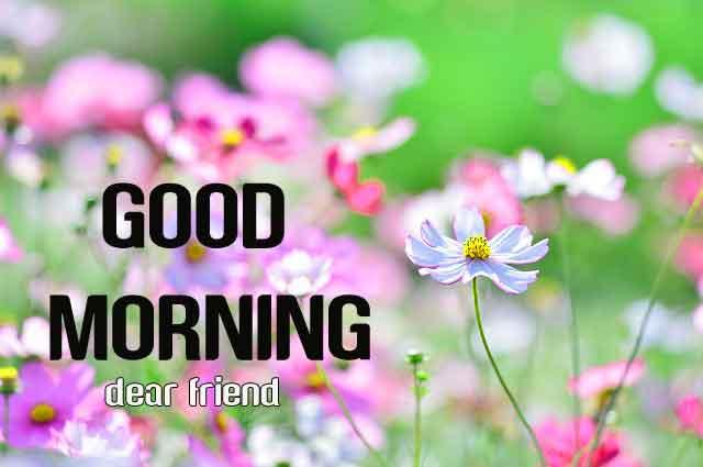 beautiful flower Good Morning hd free download