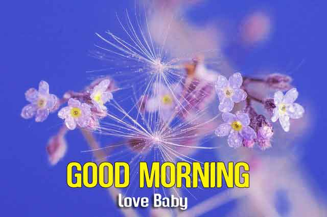 beautiful white flower Good Morning hd