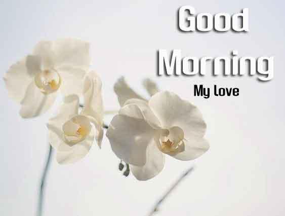 beautiful white flower Good Morning images