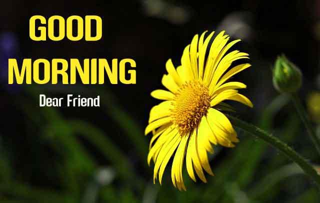 beautiful yellow flower Good Morning hd download