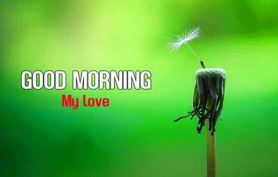 best alone flower Good Morning hd download