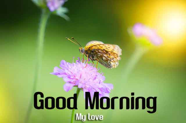 best butterfly Good Morning hd dowload