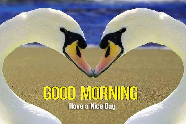 bird Good Morning wallpaper