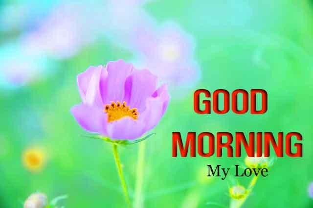 cute flower Good Morning hd download