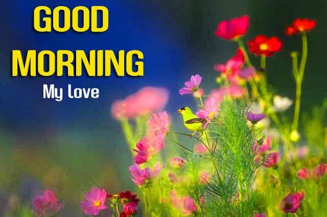 cute flower Good Morning wallpaper hd