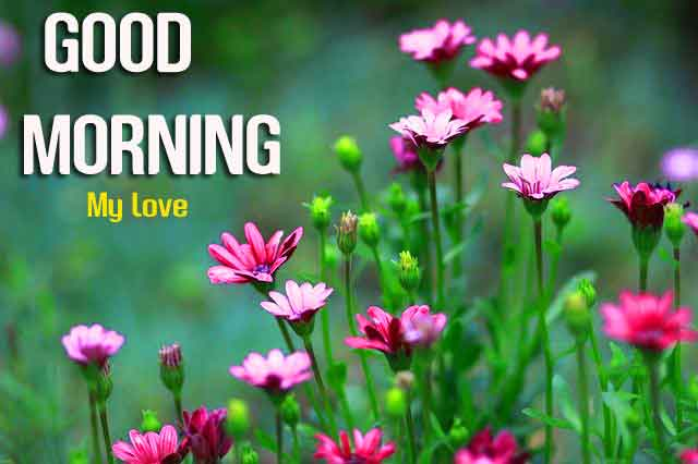 cute pink flower Good Morning hd download
