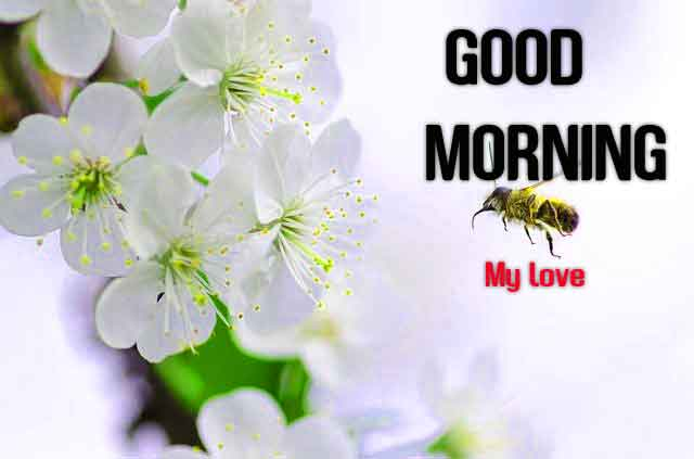 cute white flower Good Morning hd
