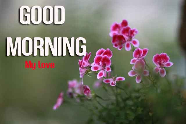 dark pink flower Good Morning hd photo