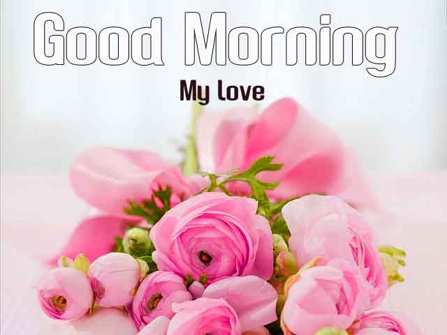 dark pink flower Good Morning hd