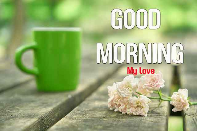 green cup flower Good Morning hd download