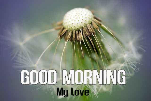 latest Good Morning flower hd