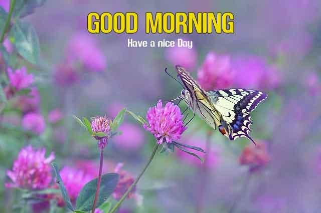 latest Good Morning hd free