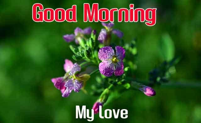 latest flower Good Morning wallpaper hd
