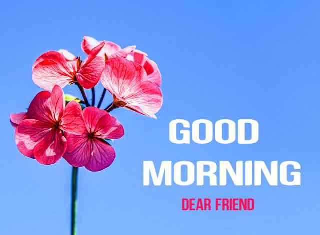 latest red flower Good Morning wallpaper