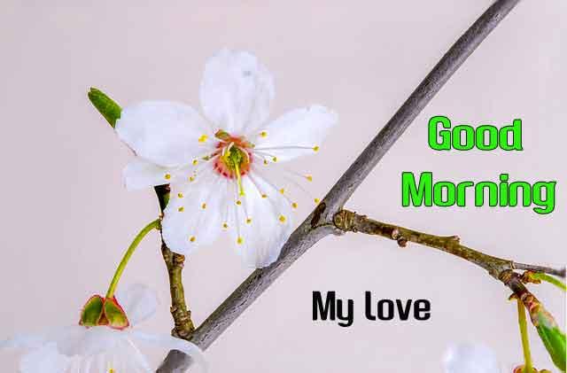 latest white flower Good Morning hd 2