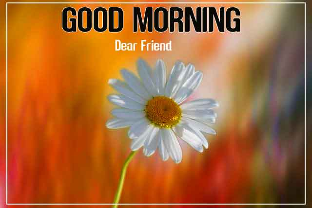 latest white flower Good Morning hd 3