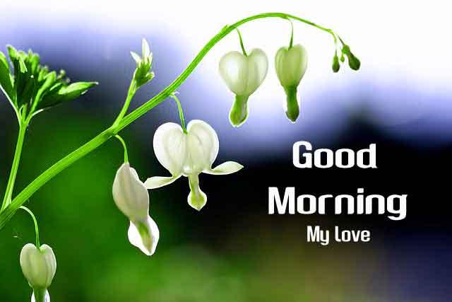 latest white flower Good Morning hd