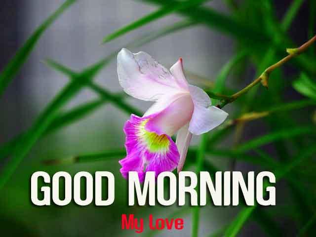 macro flower Good Morning hd pics