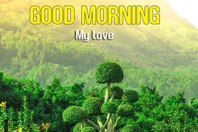 nature Good Morning wallpaper hd