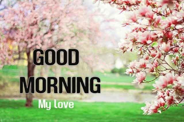 new Good Morning flower hd