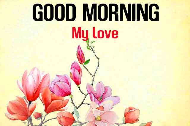 new Good Morning flower photo