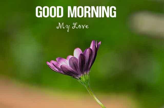 new alone flower Good Morning images hd
