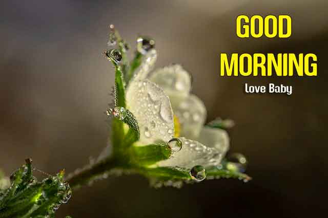 new flower Good Morning hd download