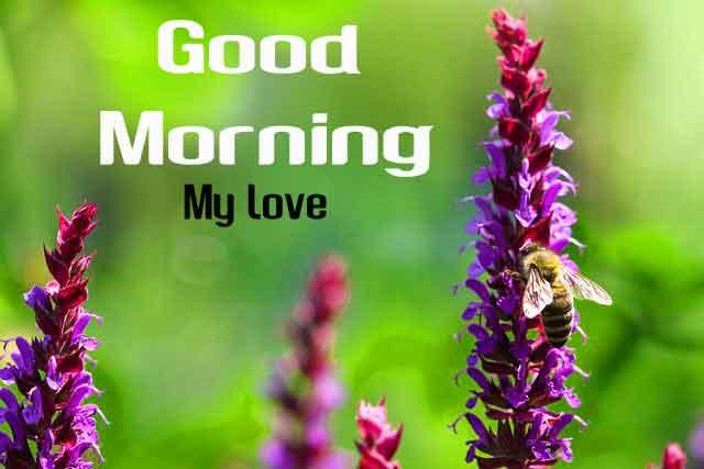 new macro flower Good Morning hd