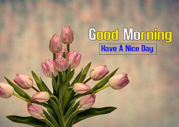 nice Good Morning flower images