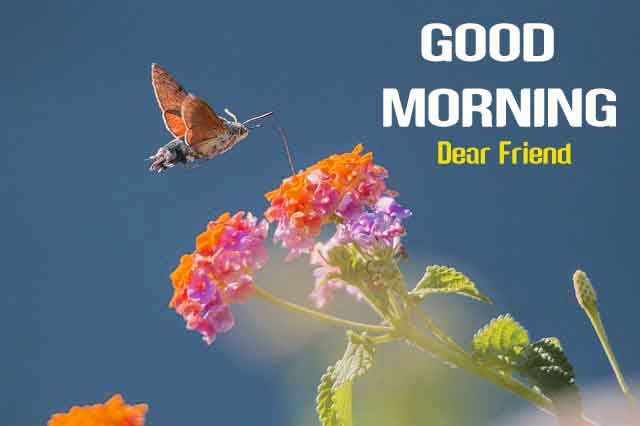 nice butterfly Good Morning hd download
